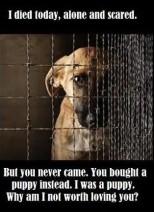 Homeless pets - Kill I died today