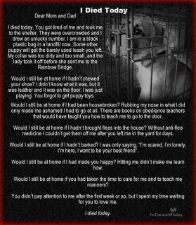 Homeless pets - Kill I died today_1