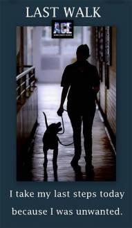 Homeless pets - Kill I took my last walk today