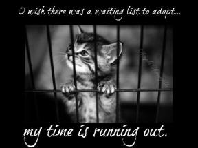 Homeless pets - Kill I wish could be adopted
