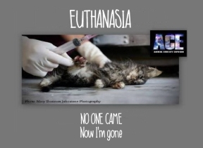 Homeless pets - Kill kitten no one came