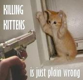 Homeless pets - Kill kittens is wrong