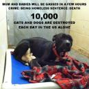 Homeless pets - Kill mum and babies due to be gassed in a few hours