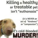 Homeless pets - Kill murder not euth with dog