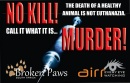 Homeless pets - Kill murder with needle 01