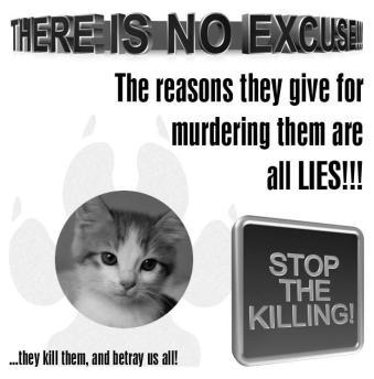 Homeless pets - Kill no excuse