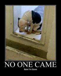 Homeless pets - Kill no one came