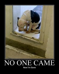 Homeless pets - Kill no one came