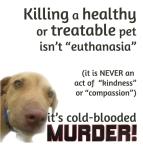 Homeless pets - Kill not euthanasia