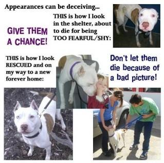 Homeless pets - Kill pics