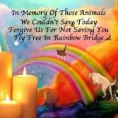 Homeless pets - Kill rainbow bridge for those we could not save