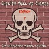 Homeless pets - Kill San Bernardino