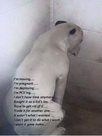 Homeless pets - Kill shelters abandoning excuses