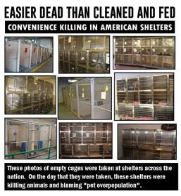 Homeless pets - Kill shelters easier dead than cleaned and fed