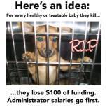 Homeless pets - Kill shelters funding lose