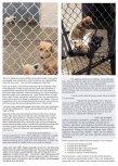 Homeless pets - Kill shelters hosing
