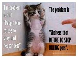Homeless pets - Kill shelters kitten standing