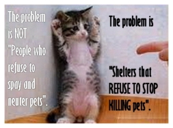Homeless pets - Kill shelters kitten standing