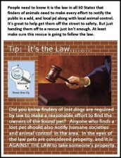Homeless pets - Kill shelters lost must keep