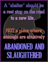Homeless pets - Kill shelters not a place where slaughtered and abandoned