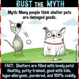 Homeless pets - Kill shelters pets are not damaged goods