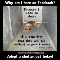 Homeless pets - Kill shelters reality is will die