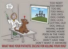 Homeless pets - Kill shelters reasons 1