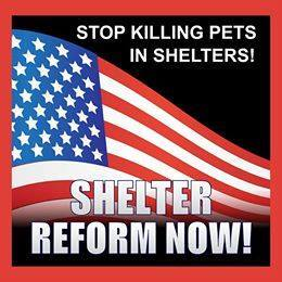 Homeless pets - Kill shelters reform now