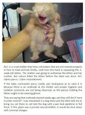 Homeless pets - Kill shelters staff holding kitten