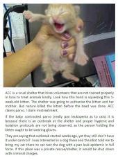 Homeless pets - Kill shelters staff holding kitten