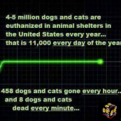 Homeless pets - Kill shelters stats