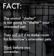Homeless pets - Kill shelters will not shelter but kill