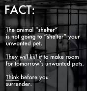 Homeless pets - Kill shelters will not shelter but kill