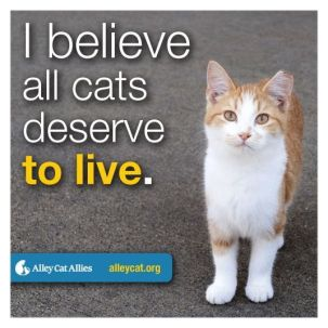 Homeless pets - Kill stop all cats deserve to live 03