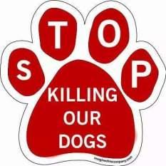 Homeless pets - Kill stop dogs