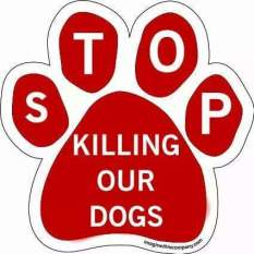 Homeless pets - Kill stop dogs