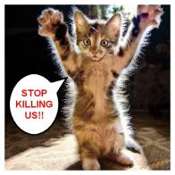 Homeless pets - Kill stop killing us