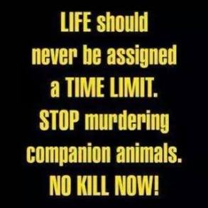 Homeless pets - Kill stop murdering now