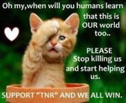 Homeless pets - Kill stop please ginger kitten TNR