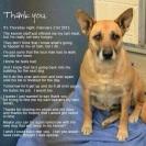 Homeless pets - Kill thank you