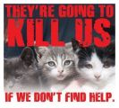 Homeless pets - Kill they will kill us if we don't find help