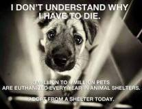 Homeless pets - Kill why do I have to die