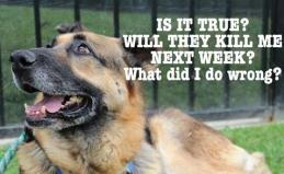 Homeless pets - Kill will they kill me next week