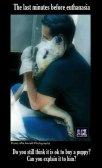 Homeless pets - Laboratory testing002