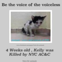 Homeless pets - NYC AC&C killed 4 weeks old