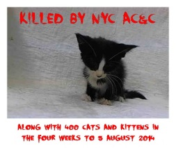 Homeless pets - NYC AC&C killed 400 cats in August 2014