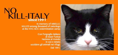 Homeless pets - NYC AC&C killed cat Arielle