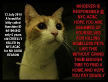 Homeless pets - NYC AC&C killed cat Sunshine 2