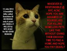 Homeless pets - NYC AC&C killed cat Sunshine 2