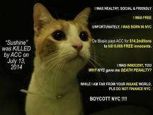 Homeless pets - NYC AC&C killed cat Sunshine